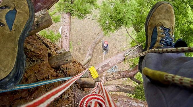 VTT, escalade, course d'orientation, tir à l'arc, sarbacane… : des activités natures à découvrir en forêt de Fontainebleau !