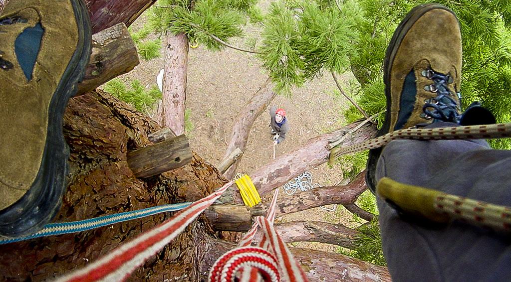 La pratique de la grimpe d'arbres en individuel