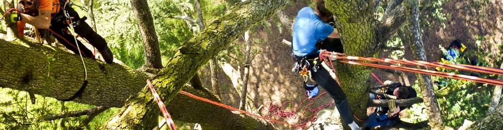 Ecole de grimpe d'arbres