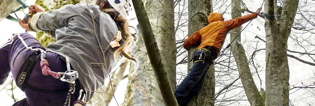 Formations pour la grimpe d'arbres