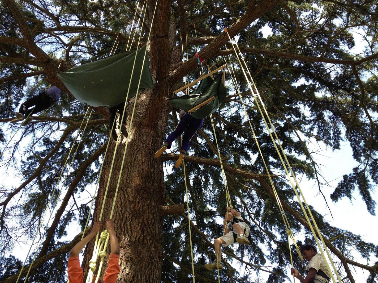 Mini-séjour : grimpe dans les arbres