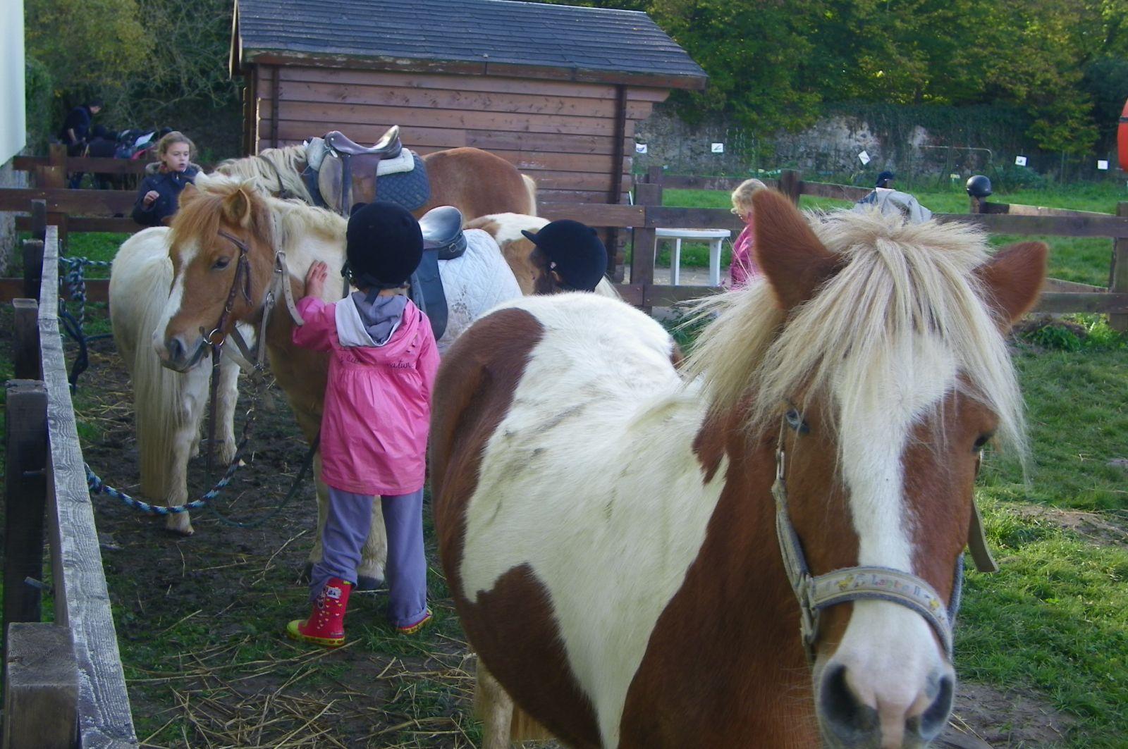 Mini-séjour : poney