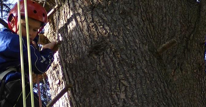 Grimpe d'arbres pour un groupe d'enfants