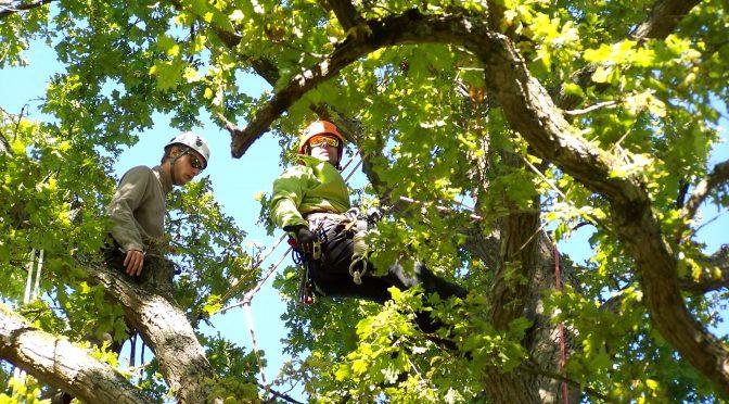 Initiez-vous au tree climbing, la grimpe en autonomie dans les arbres !