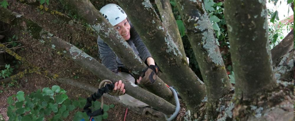 Initiation à la grimpe dans les arbres
