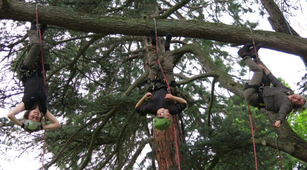 Des scientifiques participent à une journée d'initiation à la grimpe d'arbre