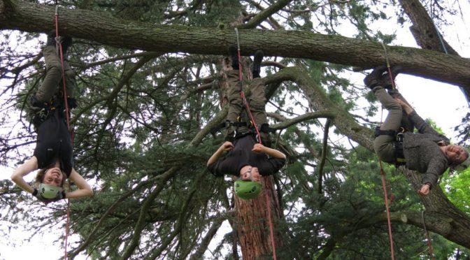 Des scientifiques participent à une journée d'initiation à la grimpe d'arbres !